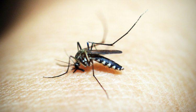 Кој е магнет за комарци?