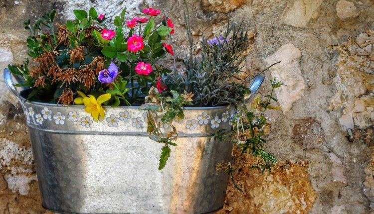 Саксии од тенџериња, тегли, кокос..,  на цвеќињата им даваат карактер