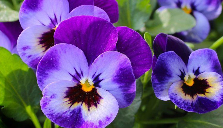 Денеска се Цветници